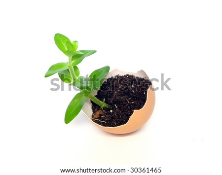 plant in the broken egg - stock photo