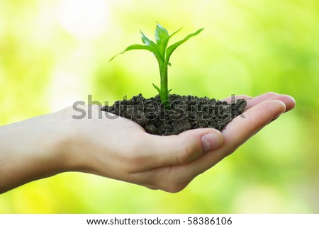 plant in the hand - stock photo