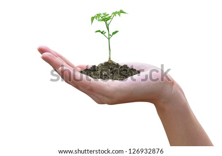 plant in the hand of women. Isolated on white.