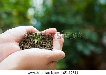 plant in the hand on green background - stock photo