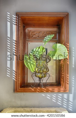 plant in window shade  - stock photo