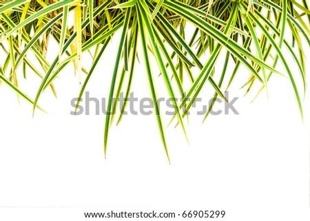 Plant isolate over white background - stock photo
