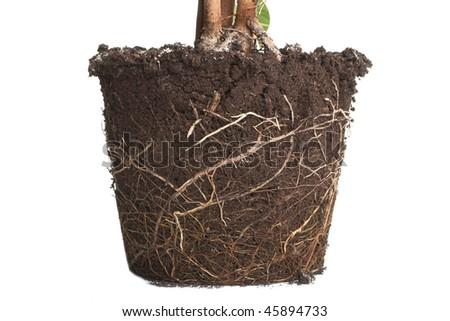 Plant isolated - stock photo
