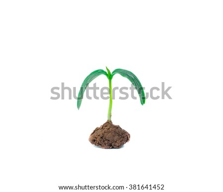 Plant isolated on white background - stock photo