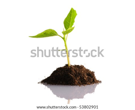 Plant isolated on white background