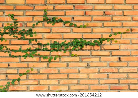 Plant ivy on a brick wall blocks.