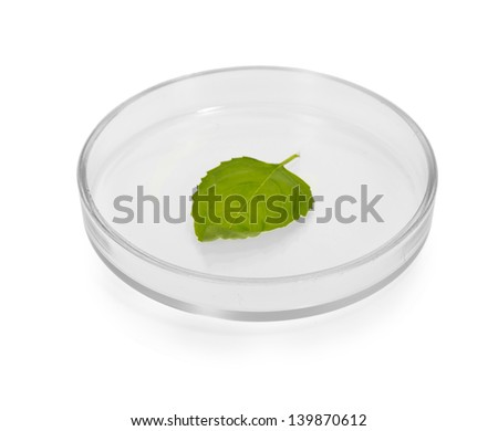 Plant leaf in Petri dish isolated on white - stock photo