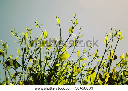 Plant leaves - stock photo