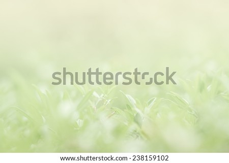 plant nature in soft style for background