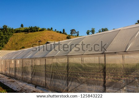 Plant nursery and blue sky, north of Thailand