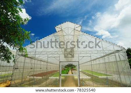 Plant nursery of organic vegetable - stock photo
