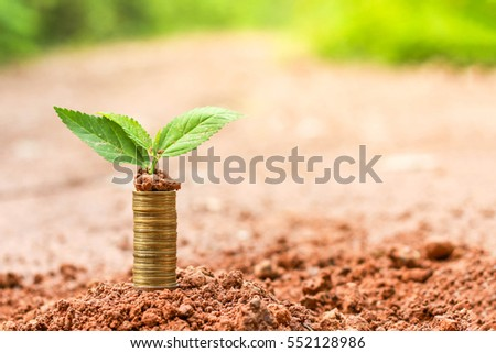 Coins money growth to the future time the investment and saving money