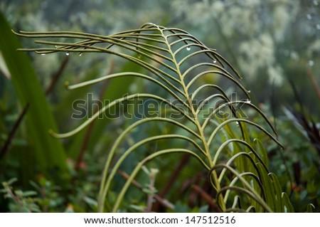 Plant of Mt Roraima. Mount Roraima, Canaima National Park, Venezuela - stock photo