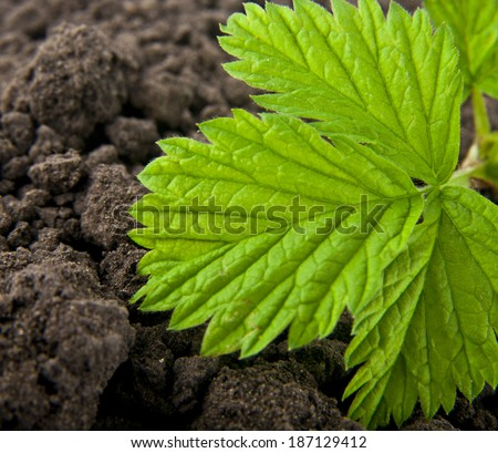 plant on a background soil - stock photo