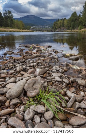 Plant on the river bed of the Coeur d'Alene River in Cataldo, Idaho. - stock photo