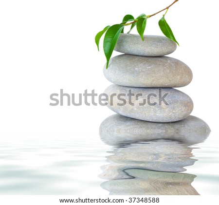Plant on top of pebbles. Isolated on white background