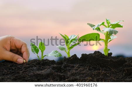 Plant,Seed,Seedling,Agriculture,Plant Growing Plant Growing concept over sunlight in morning time - stock photo