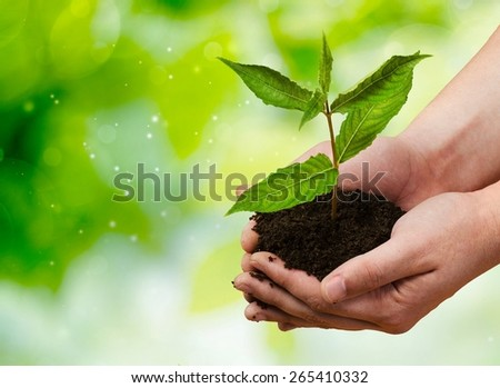 Plant. Small plant cupped in child's hands - stock photo