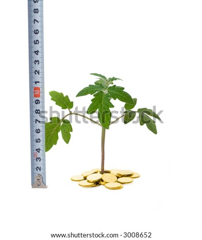 Plant sprouting from a pile of golden coins and tape measure (isolated) - concept for evaluating business growth