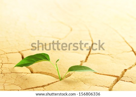 Plant sprouting in the desert - stock photo