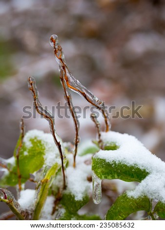 Plant sprouts frozen in ice - stock photo