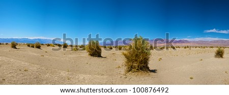 Plant stalks rise from the barren sand in the Devil's Cornfield in the center of Death Valley National Park. - stock photo