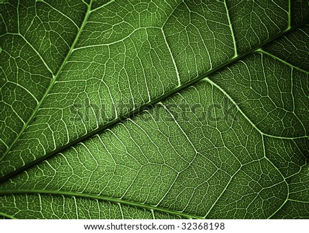 Plant texture background for different uses - stock photo