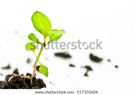 plant tree in ground over white  - stock photo