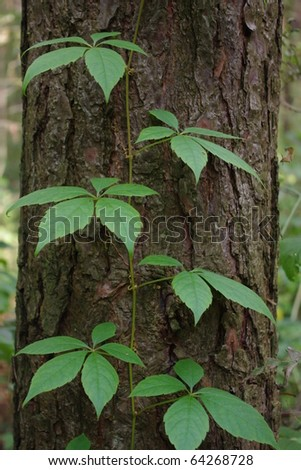Plant trudging on a tree - stock photo