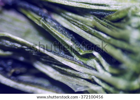 plant under the microscope, branches, thorns - stock photo