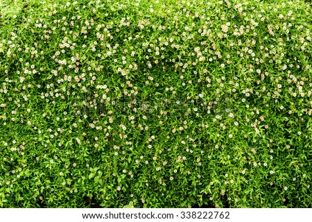plant wall,green wall, nature background, Texture of random flowers on the wall - stock photo