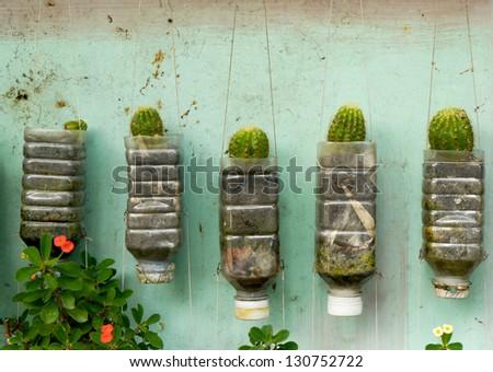Plant walls - stock photo