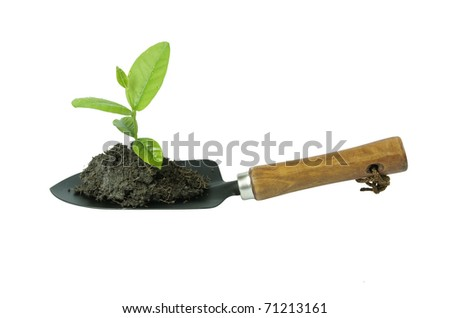 plant white tool spade wood - stock photo