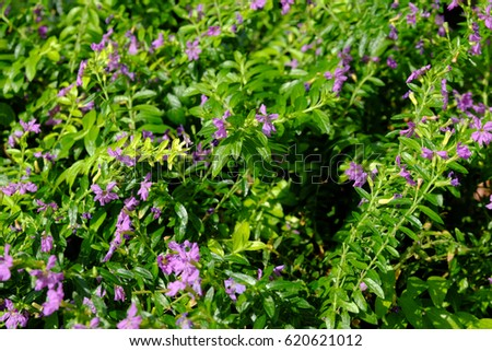 Plant small pink flowers green leaves stock photo royalty free plant with small pink flowers and green leaves mightylinksfo