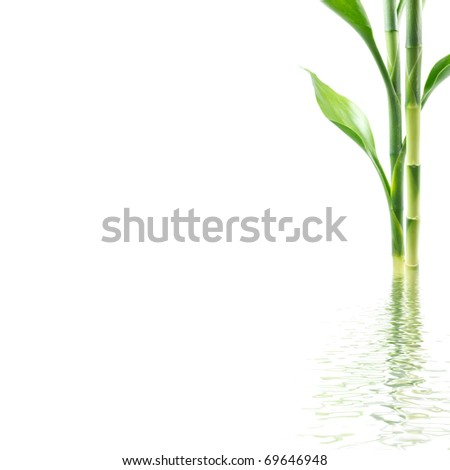 Plant with water reflection - stock photo