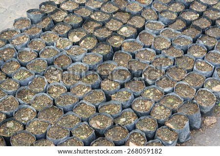 Plantation Bag on ground for plant trees - stock photo