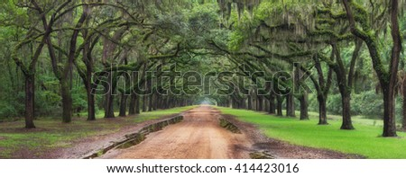 Plantation Live Oak Tree Tunnel Covered In Spanish Moss Driveway Entrance in Savannah Georgia  - stock photo