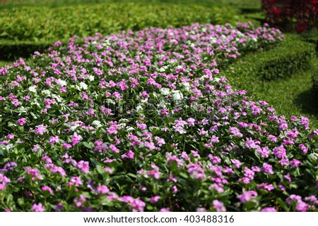 Plantation of flower in park.