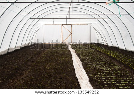 Plantation of seedlings in a greenhouse at the farm - stock photo