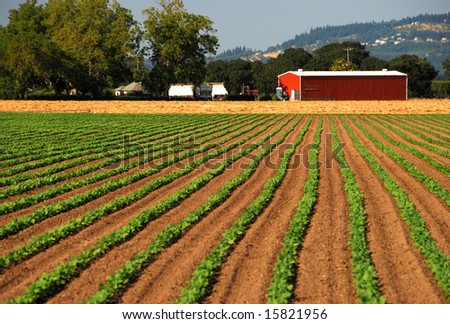 Planted Crops Leading to Red Barn
