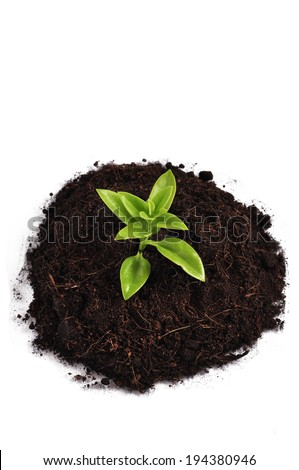 Planted with the soil is fertile. Trees grow