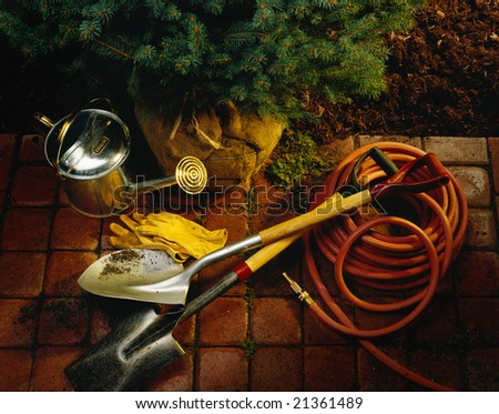 Planting a pine tree in the garden - stock photo