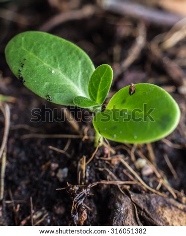 Planting a small plant on a pile of soil  - stock photo