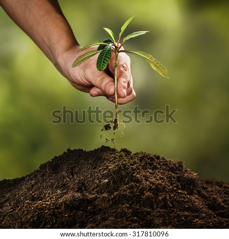 Planting a small plant on a pile of soil on green bokeh background.  Background for creative, advertising concept featuring gardening. - stock photo