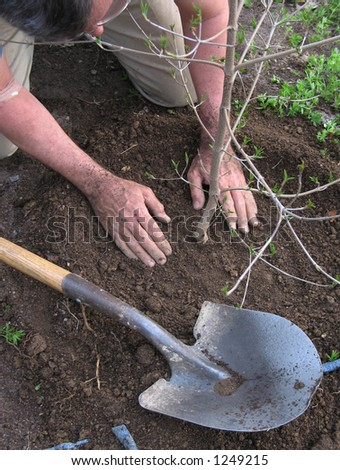 Planting a tree - stock photo