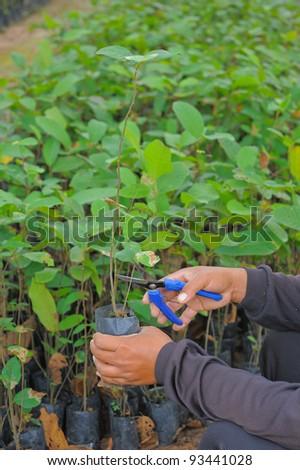 Planting a tree - stock photo