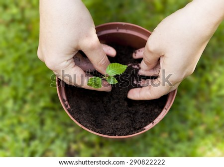 Planting a tree in a flower pot - stock photo