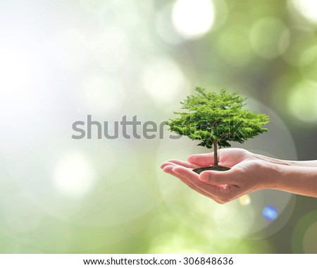 Planting bio big tree on female human hand, natural greenery leaves background sun light flare: Saving eco arbor soil environment land ecosystem preservation creative concept: CSR, WWD conceptual idea - stock photo