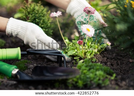 Planting Flowers in a garden Closeup