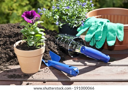 Planting flowers in the garden home  - stock photo